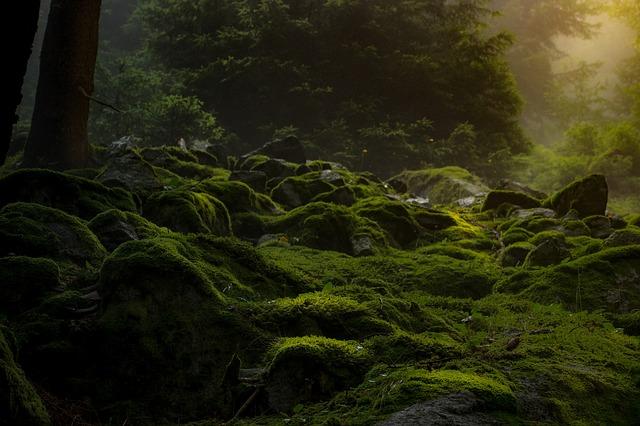 mech v lese