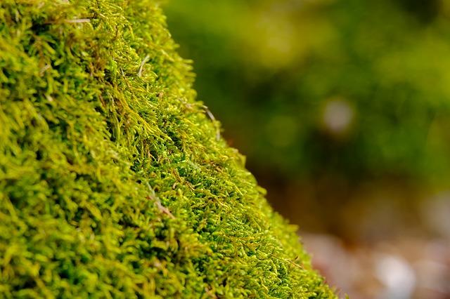 mech zelený